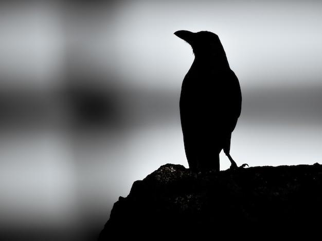 Scala di grigi di una silhouette di corvo in piedi su una roccia