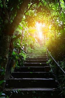 Scala nella foresta e luce nell'oscurità
