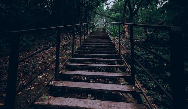 Scale che camminano nello stile cinematico e scuro della foresta tailandia
