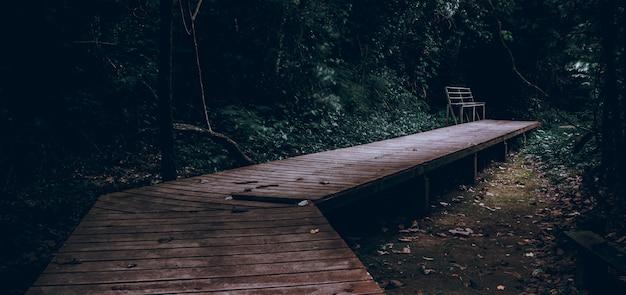 Scale che camminano nello stile scuro cinematico della foresta tailandia