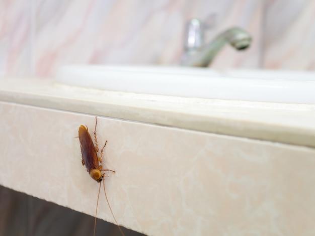 Scarafaggio in casa sullo sfondo della toilette