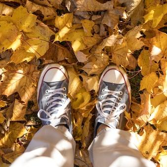Scarpe da ginnastica del primo piano sul fondo delle foglie