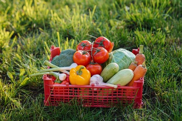Scatola di palude con verdure mature e belle raccolte da un giardino ecologico. uno stile di vita sano. cibo ecologico e sano.