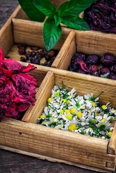 Scatola raccolta nella caduta di erbe medicinali per tè e tè medicinali