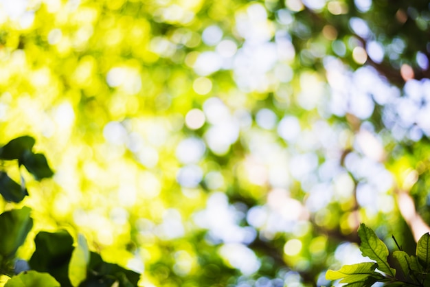 Scena defocused di fogliame fresco e cielo blu, ideale come sfondo della natura con vivaci colori vivaci