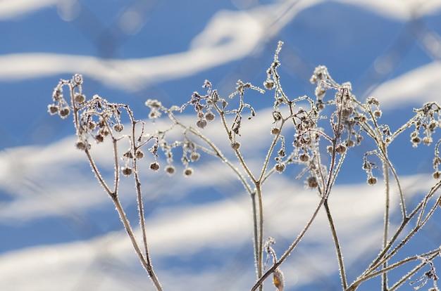 Scena di ghiaccio naturale invernale. pianta gelata di frozenned