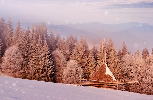 Scena di mattina soleggiata nella foresta di montagna. luminoso paesaggio invernale nel bosco innevato