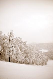 Scena invernale, deserto