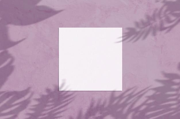 Scena moderna del modello della cancelleria di luce solare di estate. cartolina d'auguri in bianco piana di vista superiore della disposizione con la sovrapposizione dell'ombra dei rami e di foglia di palma sul fondo del purpur di lerciume.
