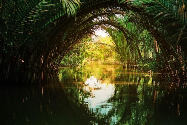 Scena pacifica di palma nipa o nypa fruticans wurmb sul fiume
