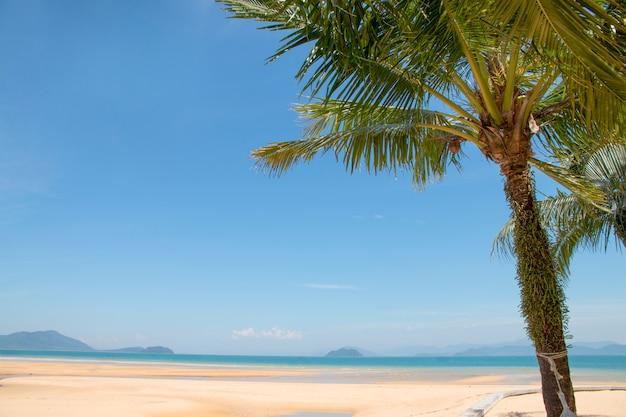 Scena rilassante, spiaggia tropicale con albero di cocco