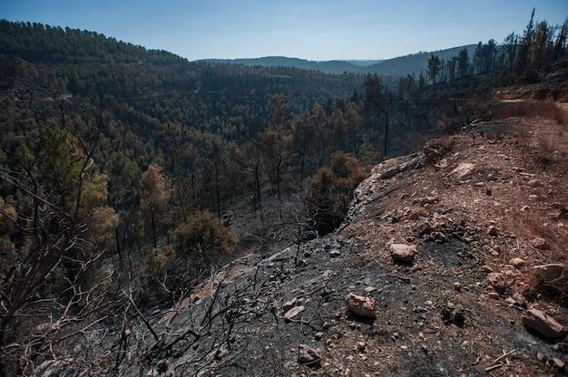 Scenario della foresta in montagna durante il giorno