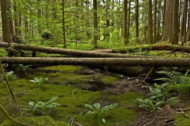Scenario della foresta