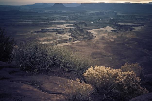 Scenario di diversi tipi di piante che crescono in mezzo alle colline del canyon