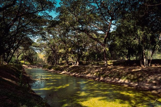 Scenario verde di una foresta di primavera con alberi di fogliame che cade su un fiume naturale nel sud-est asiatico. natura moderna in tailandia e risorse ecologiche in ambiente pulito.
