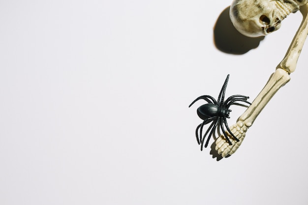 Scheletro con grande ragno a portata di mano