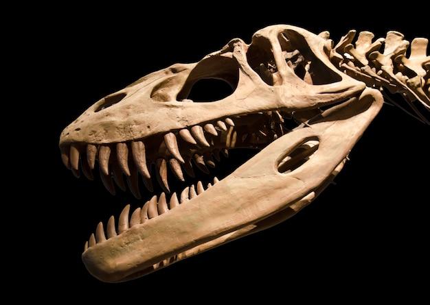 Scheletro di dinosauro su sfondo nero isolato