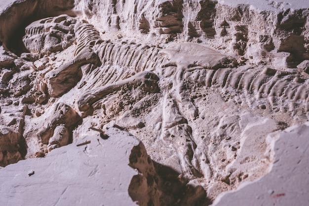 Scheletro di dinosauro tyrannosaurus rex simulatore fossile in pietra macinata.