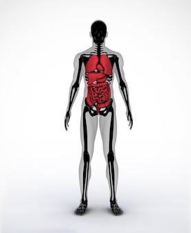 Scheletro digitale nero e grigio con organi visibili
