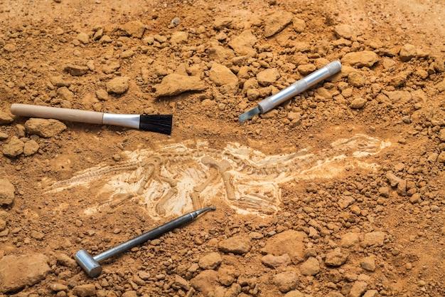 Scheletro e strumenti archeologici. formazione per scavare fossili