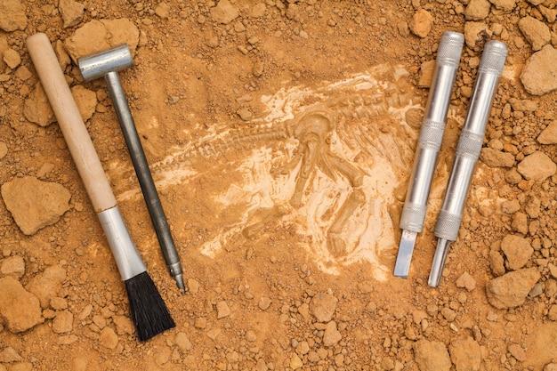 Scheletro e strumenti archeologici