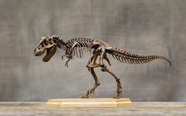 Scheletro fossile del re dei dinosauri tyrannosaurus rex