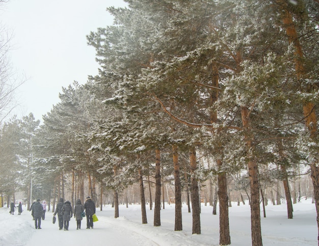 Sciare sulla neve fresca in inverno parco tra gli alberi, la gente cammina lungo la pista da sci, attività invernali all'aperto