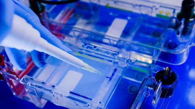 Scienziato che conduce il processo biologico di elettroforesi su gel come parte della ricerca