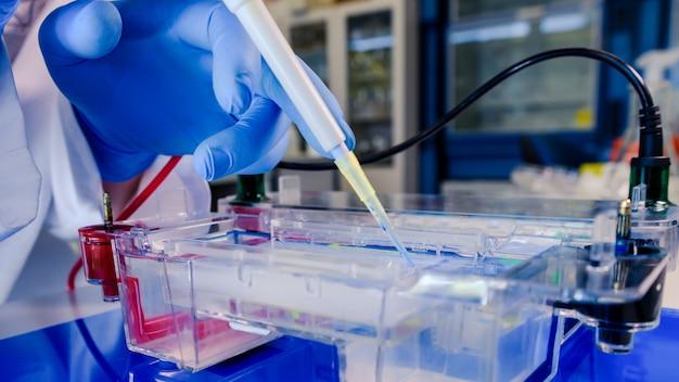 Scienziato che conduce il processo biologico di elettroforesi su gel nell'ambito della ricerca sul coronavirus