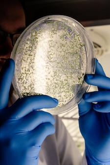 Scienziato che esamina una sostanza verde su una capsula di petri mentre conduce una ricerca sul coronavirus