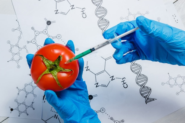 Scienziato ogm che inietta liquido verde dalla siringa al pomodoro rosso