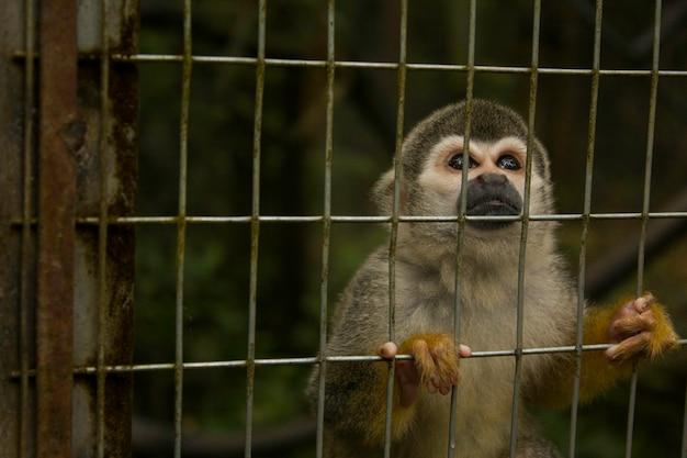 Scimmia amazzonica
