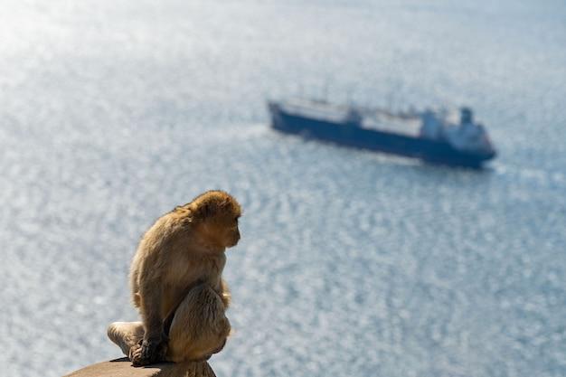 Scimmia che si siede con il mare e la nave a gibilterra