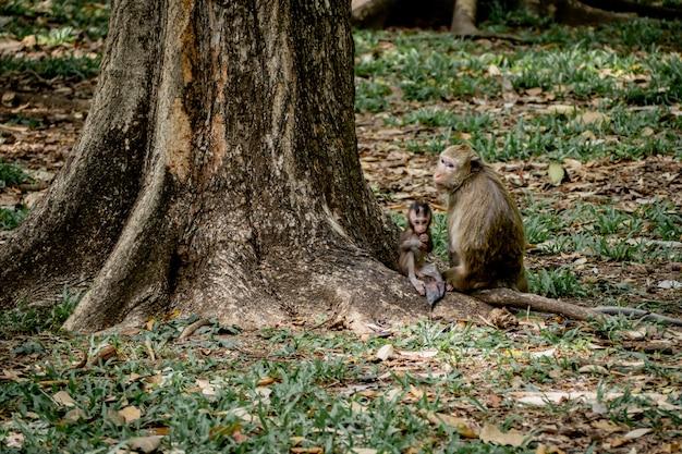 Scimmia del bambino sotto la protezione della madre. la famiglia delle scimmie con una pelliccia arancione arruffata e un'espressione umana