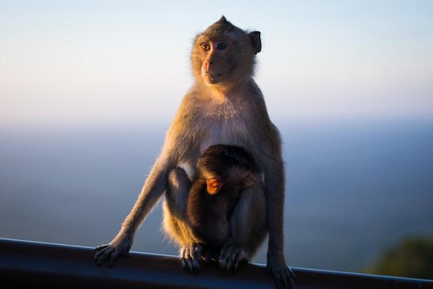 Scimmia della mamma che si siede su di legno