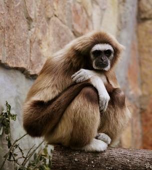 Scimmia nello zoo
