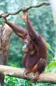 Scimmia su un albero
