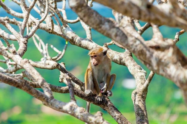 Scimmia sull'albero