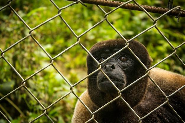 Scimmia triste