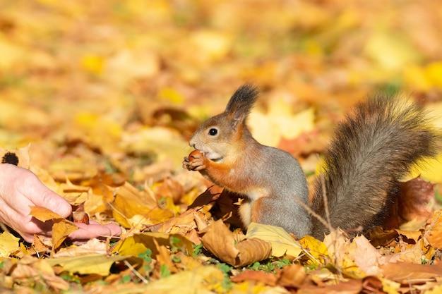 Scoiattolo nel parco d'autunno