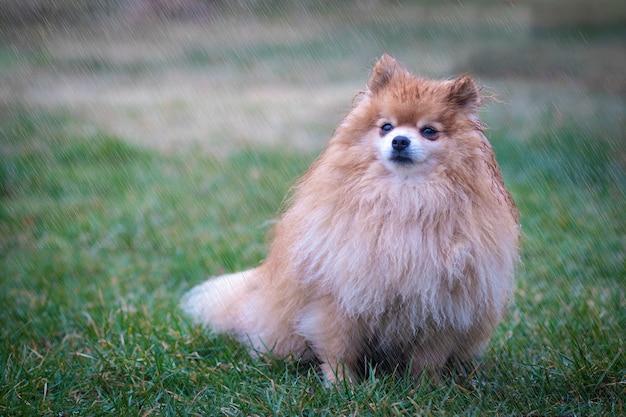Sconvolto cane bagnato sotto la pioggia