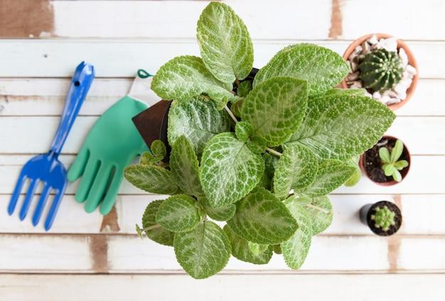 Scrivania da giardinaggio piatta con viola fiamma, piante di cactus in vaso, guanto e forchetta sul tavolo di legno vintage