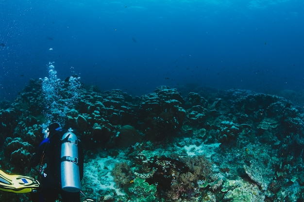 Scuba diver esplora una barriera corallina