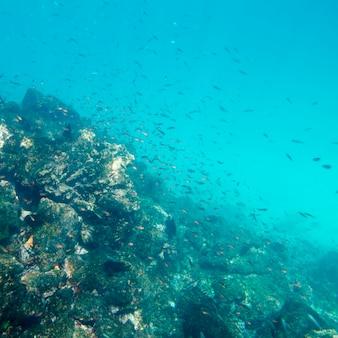 Scuola di pesce che nuota sott'acqua, puerto egas, santiago island, isole galapagos, ecuador