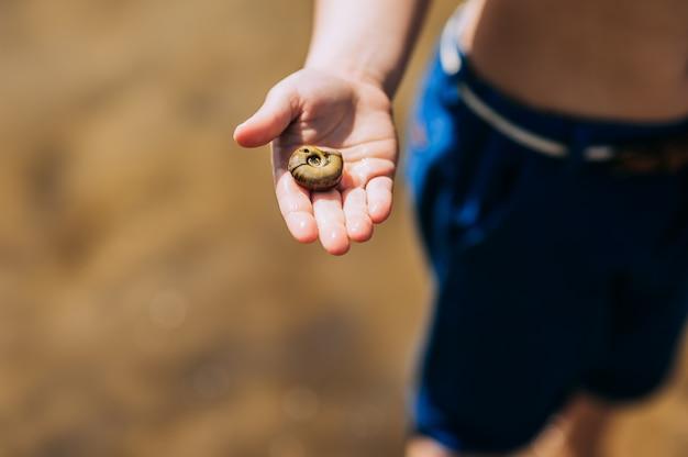 Seashell detenuto da un giovane ragazzo sulla spiaggia