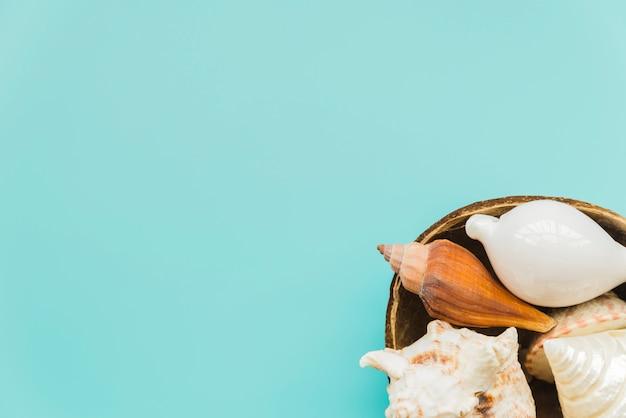 Seashells disposti in guscio di noce di cocco su sfondo