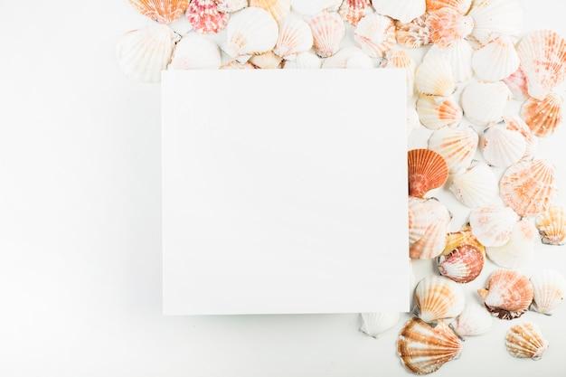 Seashells vicino al foglio di carta