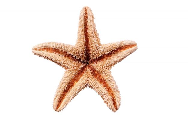 Seastar del piccolo pesce della stella isolato su fondo bianco