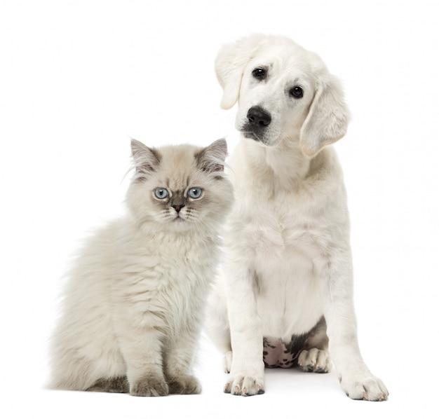Seduta del cane e del gatto isolata su bianco