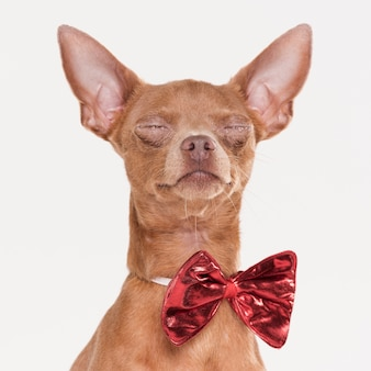 Seduta di cane carino vista frontale
